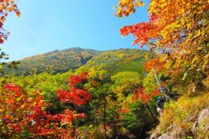 亀山オータムフェスティバル2018!日程や見どころは?宿泊施設もご紹介!