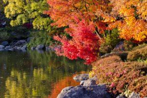 亀山湖の紅葉2018!見ごろの時期はいつ?周辺おすすめグルメも紹介!