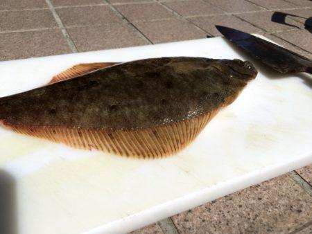 高級魚マツカワの稚魚大量死は地震の予兆?原因を考察してみた