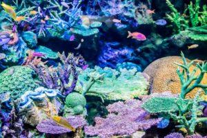 サンシャイン水族館のバレンタイン2018の見どころやイベントをご紹介!