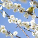 国営塩那台地の梅の里2018の見どころや梅まつりイベントをご紹介!