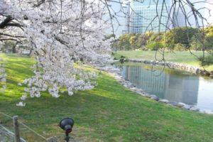 浜離宮恩賜庭園のお花見2018のアクセスや駐車場は?水上バスからの眺めもおすすめ!