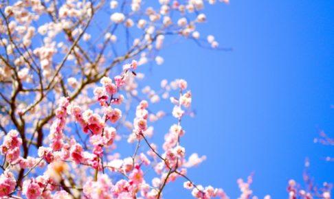 観音山梅の里梅園の梅まつり2018の開花情報や見どころを紹介!