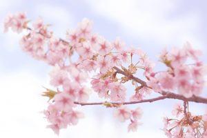 紀三井寺の花見2018!見ごろ・開花はいつ?気になる駐車場情報もご紹介!