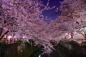 目黒川のお花見2018の屋台やライトアップ情報を紹介!クルーズからの景色もおすすめ!