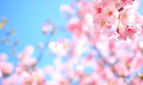 王子動物園の花見2018!見ごろ・開花はいつ?人気の夜桜通り抜けも紹介!