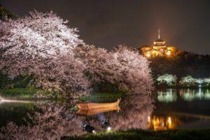 三渓園の桜祭り2018の見ごろやライトアップ情報は?気になる混雑予想も紹介!