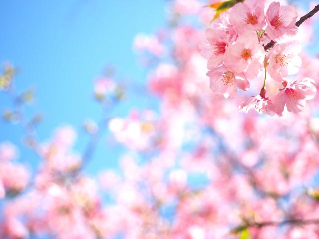 五月山公園のお花見2018!見ごろ・開花はいつ?気になる駐車場情報もご紹介!