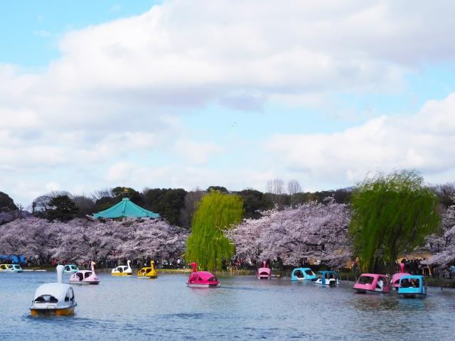 上野恩賜公園の桜まつり2018のライトアップや屋台情報は?見どころ満載の花見スポット!