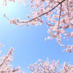 2018年中国地方のお花見・桜の名所5選!見ごろとおすすめポイントを紹介!