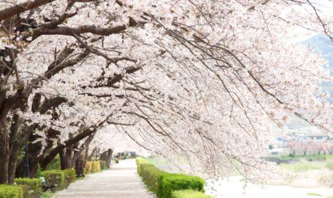 2018年関西のおすすめお花見スポット10選!穴場や定番どころまで勢揃い!