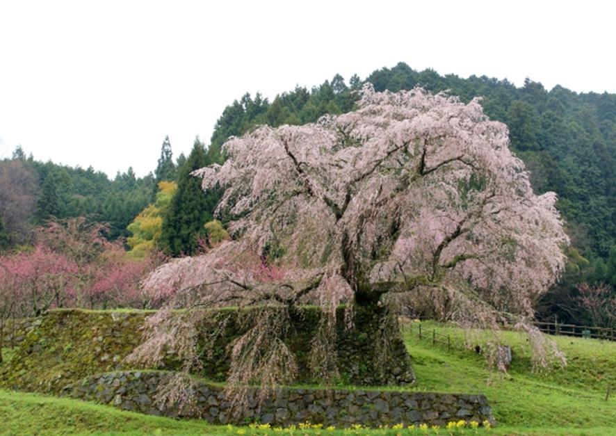 2018年関西のお花見・桜の名所10選!穴場や定番どころまで勢揃い!
