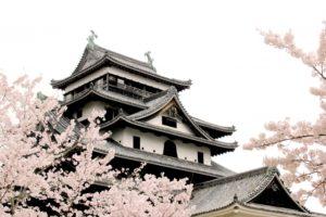 松江城山公園の桜2018!見ごろ・開花はいつ?ライトアップや桜まつり情報も紹介!