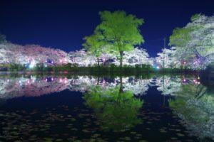 茂原公園の桜まつり2018!ライトアップや屋台の出店情報を紹介!