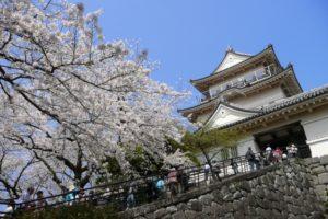 小田原城の桜祭り2018のライトアップ時間や開花情報は?種類豊富な屋台も魅力!