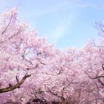 戦場ヶ原公園の桜2018!お花見の見ごろはいつ?おすすめ観光スポットも紹介!