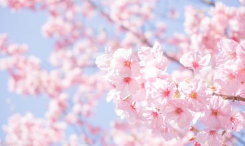 城山公園(小山市)のお花見2018の見どころや桜まつりイベントを紹介!
