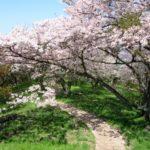 紫雲出山の桜2018!見ごろ・開花はいつ?おすすめ癒しのカフェスポットも紹介!