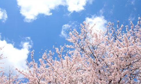 八千代湖周辺の桜2018!お花見の見ごろ・開花はいつ?人気のお好み焼き店も紹介!