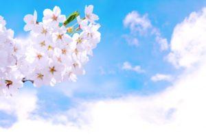 山北鉄道公園の桜まつり2018の日程や開花情報は?よさこいイベントも紹介!