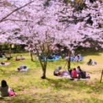 西公園(福岡市)の桜2018!開花やライトアップはいつ?人気のラーメン店も紹介!
