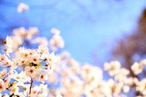 小城公園のお花見2018!桜の見ごろ・開花はいつ?佐賀のおすすめグルメも紹介!