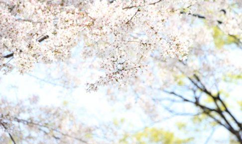 大将陣公園の桜2018!見ごろ・開花はいつ?飯塚市おすすめの食事処も紹介!