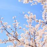 龍城公園の桜2018!お花見の見どころや駐車場情報を紹介!