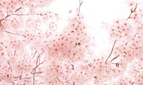 大村公園の桜2018!ライトアップ・開花はいつ?おすすめ周辺観光スポットも紹介!