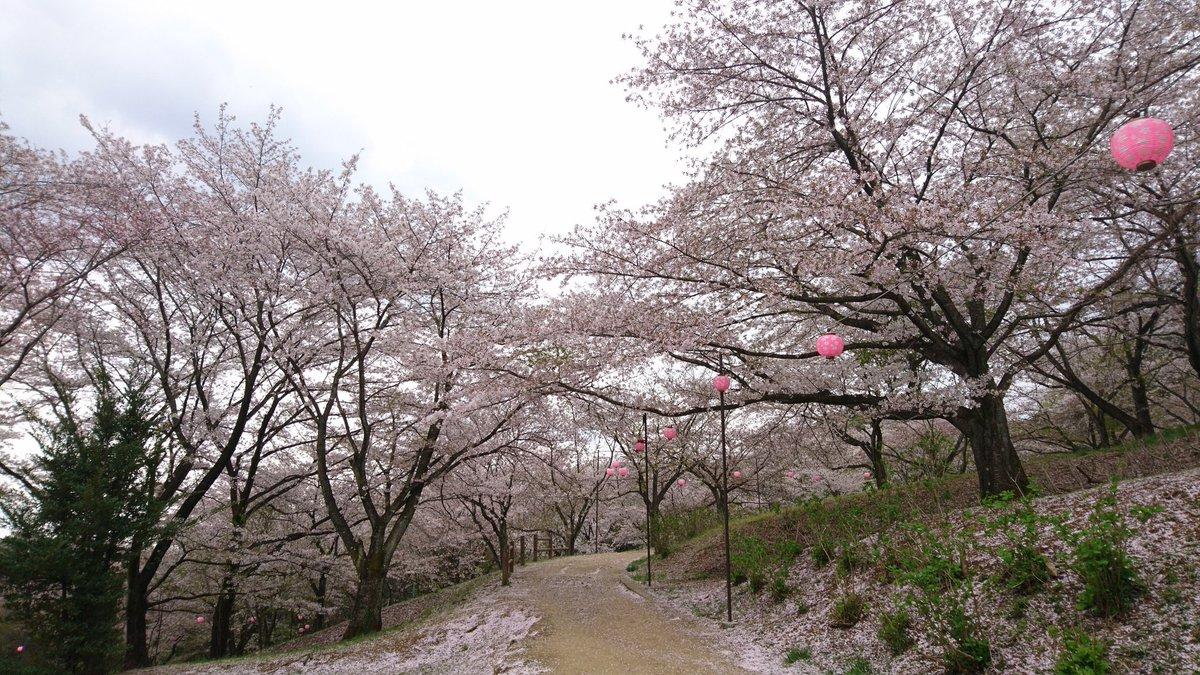さくらの山公園(越生町)の桜2018!開花・見頃はいつ?おすすめランチスポットも紹介!