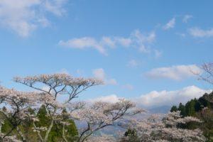 高森峠千本桜の花見2018!見ごろ・開花はいつ?周辺のおすすめ宿も紹介!