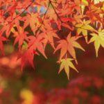 竈門神社の紅葉2018の見ごろ・時期はいつ?もみじ祭りやライトアップも紹介!