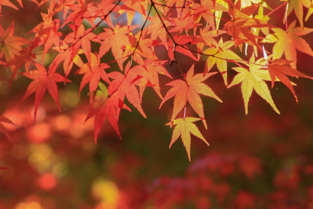 【2018年】北海道の紅葉の名所7選!おすすめスポットを見ごろ順に紹介!
