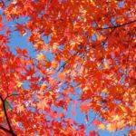 【2018】関西の紅葉の名所20選!おすすめスポットを県ごとの見頃順に紹介!