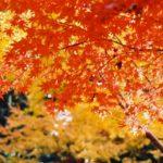 六甲山の紅葉2018!見ごろの時期はいつ?おすすめ散策コースも紹介!