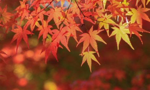 【2018年】中国地方の紅葉の名所10選!おすすめスポットを県別・見ごろ順に紹介!